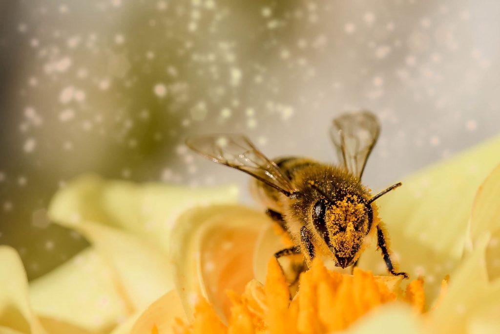 miel cosmetiques bio