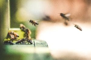 cosmetique miel bio