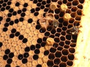 api sens ciosmetique