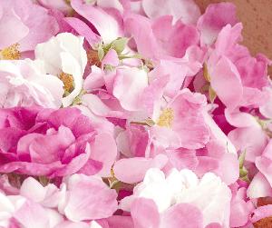 la beaute par les fleurs bio naturelle