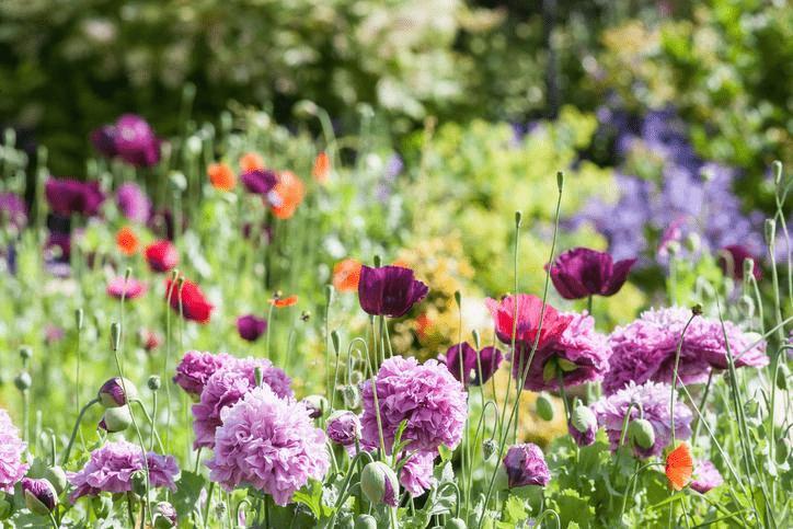 fleurs min